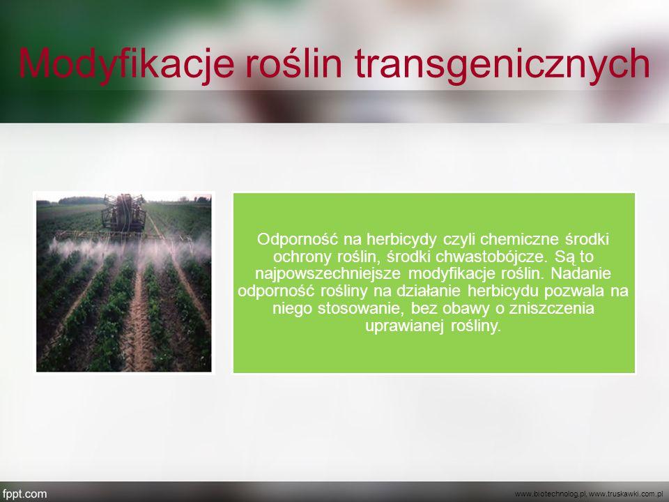Modyfikacje roślin transgenicznych Odporność na herbicydy czyli chemiczne środki ochrony roślin, środki chwastobójcze. Są to najpowszechniejsze modyfi