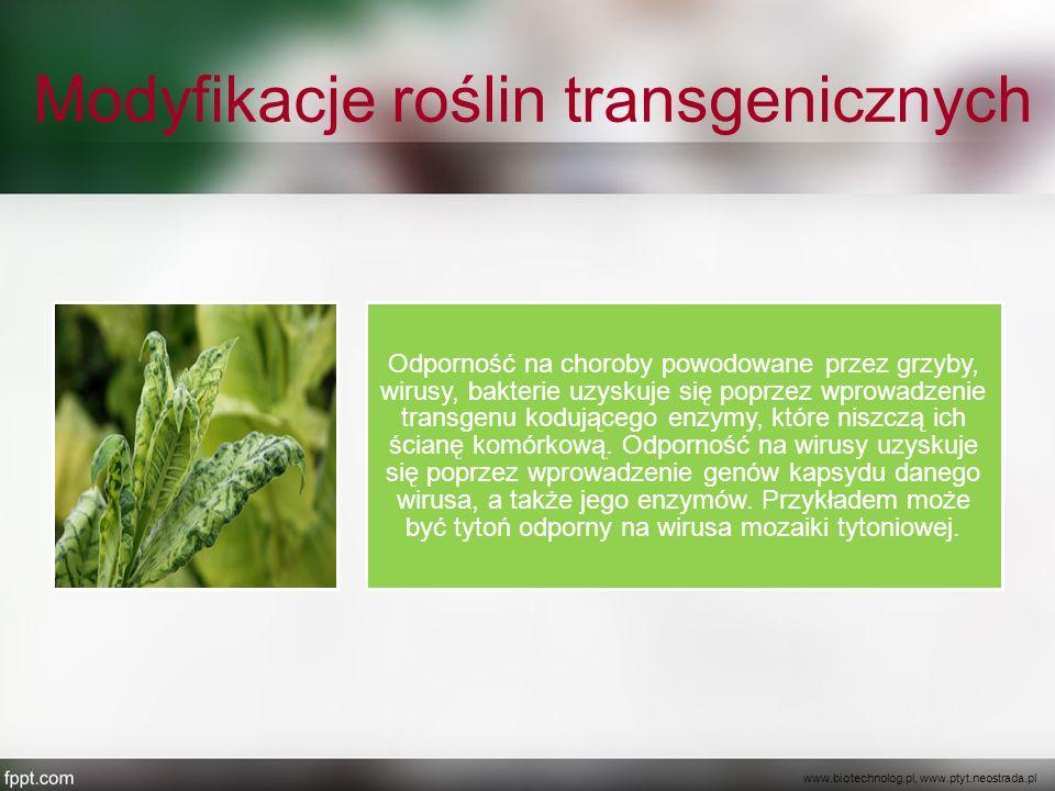 Modyfikacje roślin transgenicznych Odporność na choroby powodowane przez grzyby, wirusy, bakterie uzyskuje się poprzez wprowadzenie transgenu kodujące