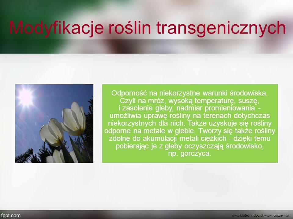 Modyfikacje roślin transgenicznych Odporność na niekorzystne warunki środowiska. Czyli na mróz, wysoką temperaturę, suszę, i zasolenie gleby, nadmiar