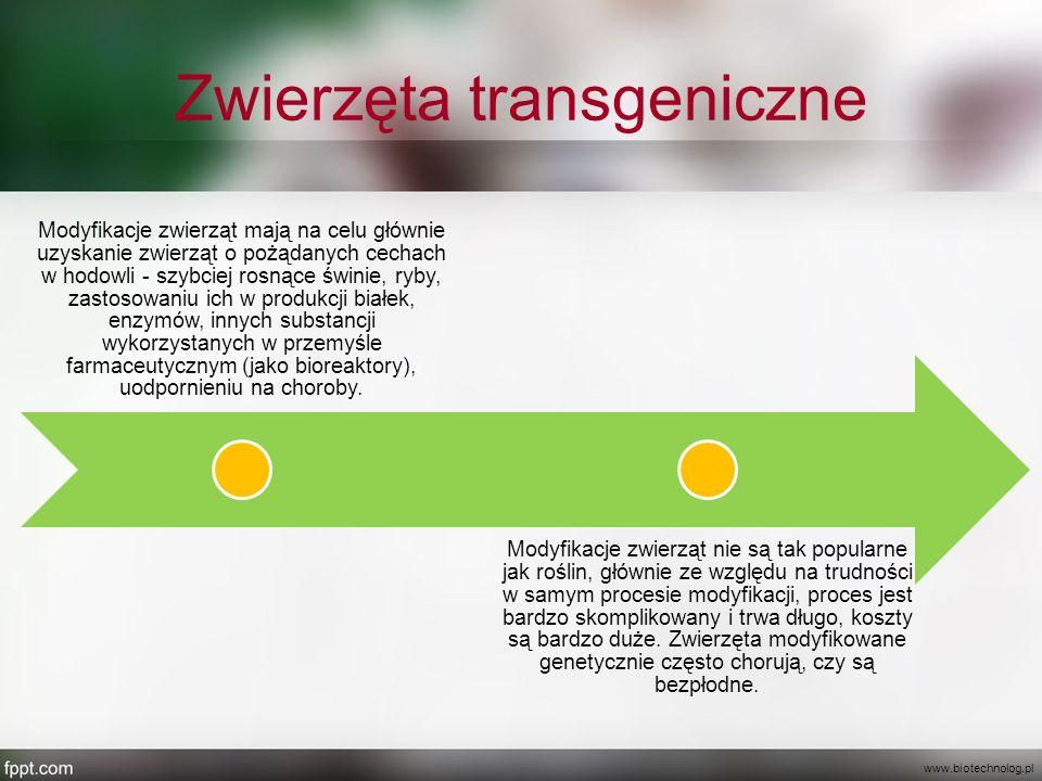 Zwierzęta transgeniczne Modyfikacje zwierząt mają na celu głównie uzyskanie zwierząt o pożądanych cechach w hodowli - szybciej rosnące świnie, ryby, z