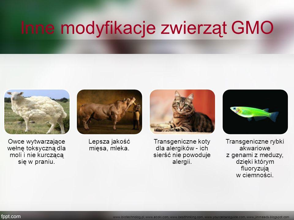 Inne modyfikacje zwierząt GMO Owce wytwarzające wełnę toksyczną dla moli i nie kurczącą się w praniu. Lepsza jakość mięsa, mleka. Transgeniczne koty d