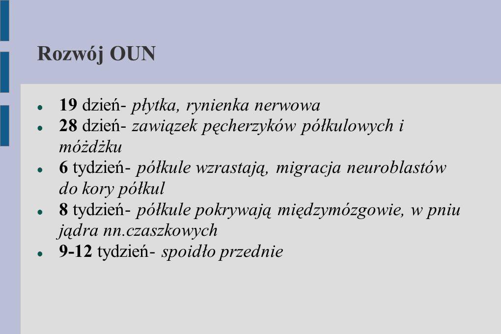 Rozwój OUN 19 dzień- płytka, rynienka nerwowa 28 dzień- zawiązek pęcherzyków półkulowych i móżdżku 6 tydzień- półkule wzrastają, migracja neuroblastów