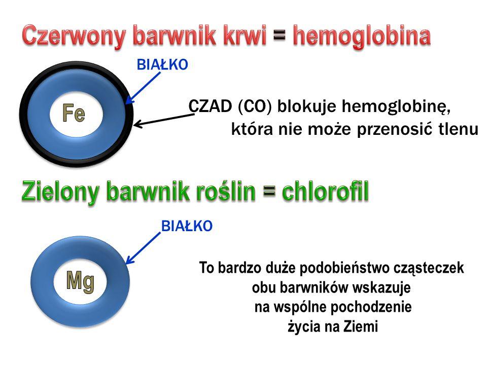 BIAŁKO CZAD (CO) blokuje hemoglobinę, która nie może przenosić tlenu To bardzo duże podobieństwo cząsteczek obu barwników wskazuje na wspólne pochodze