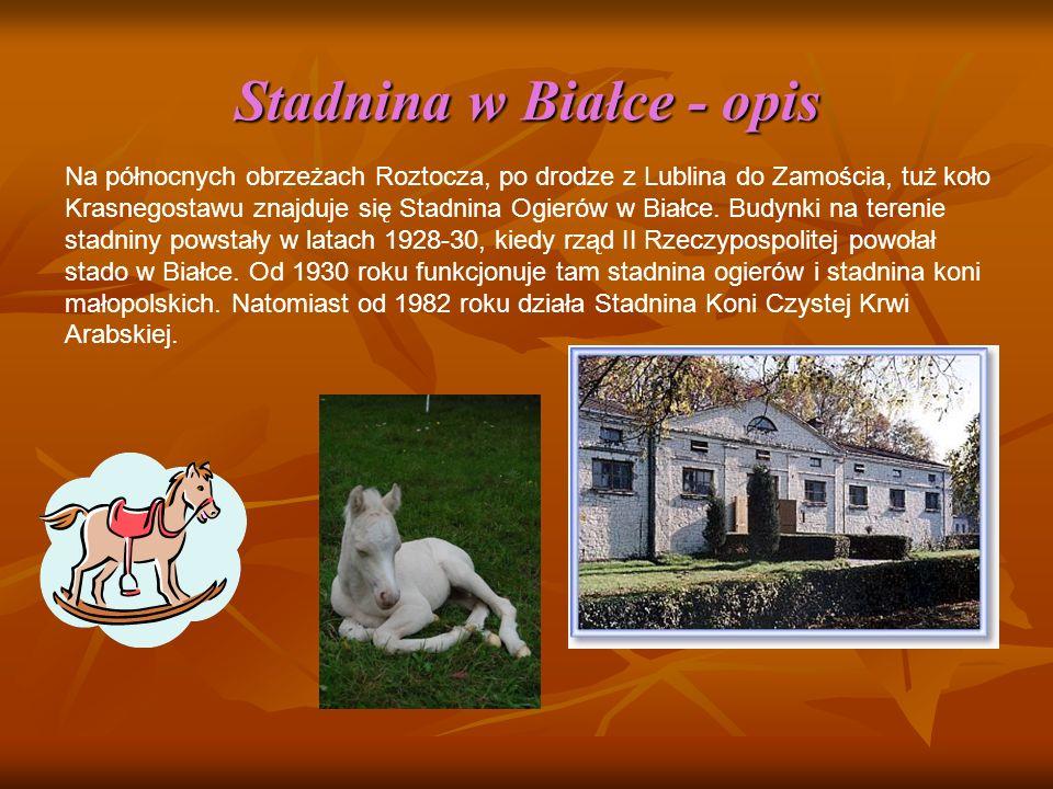 Stadnina w Białce - opis Na północnych obrzeżach Roztocza, po drodze z Lublina do Zamościa, tuż koło Krasnegostawu znajduje się Stadnina Ogierów w Białce.