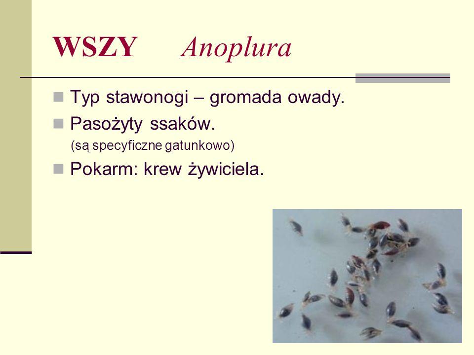 WSZY Anoplura Typ stawonogi – gromada owady. Pasożyty ssaków. (są specyficzne gatunkowo) Pokarm: krew żywiciela.