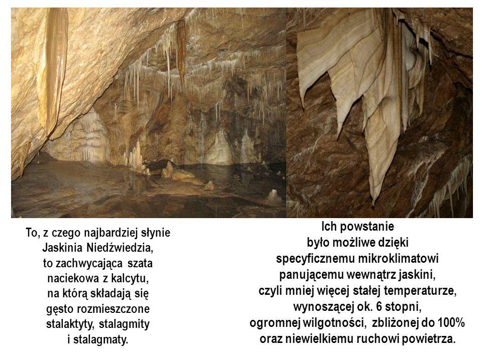 Jaskinia Niedźwiedzia w Kletnie w Kotlinie Kłodzkiej jest wyjątkowa pod wieloma względami. Przede wszystkim jest bardzo długa, przez co łatwo było wyz