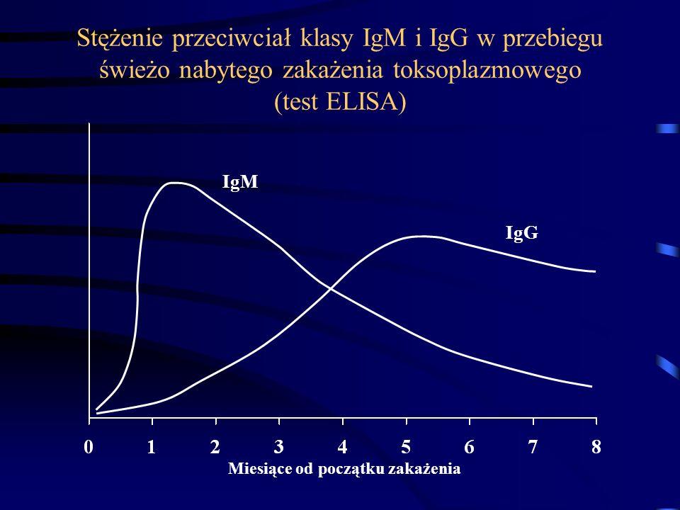 Stężenie przeciwciał klasy IgM i IgG w przebiegu świeżo nabytego zakażenia toksoplazmowego (test ELISA) Miesiące od początku zakażenia IgM IgG