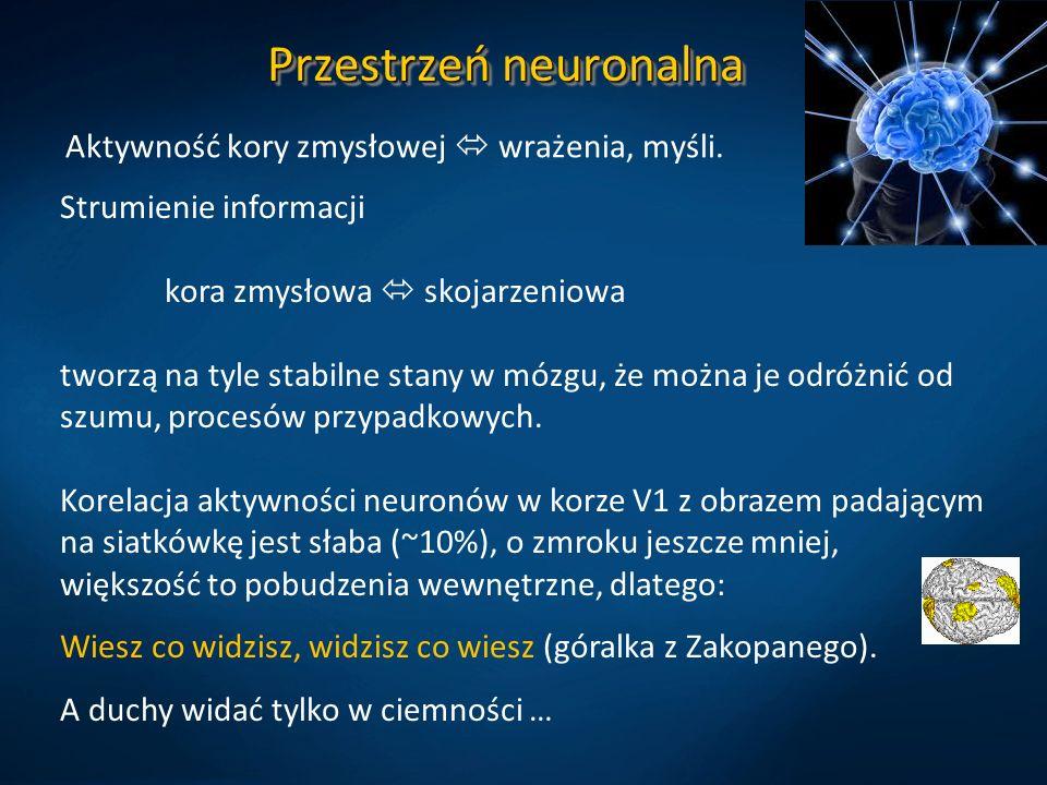 Przestrzeń neuronalna Aktywność kory zmysłowej  wrażenia, myśli. Strumienie informacji kora zmysłowa  skojarzeniowa tworzą na tyle stabilne stany w