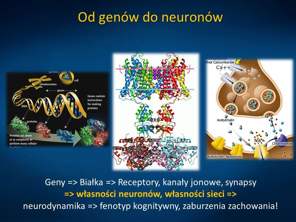Od genów do neuronów Geny => Białka => Receptory, kanały jonowe, synapsy => własności neuronów, własności sieci => neurodynamika => fenotyp kognitywny