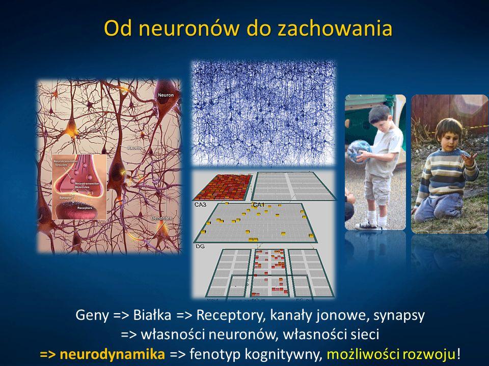 Od neuronów do zachowania Geny => Białka => Receptory, kanały jonowe, synapsy => własności neuronów, własności sieci => neurodynamika => fenotyp kognitywny, możliwości rozwoju!