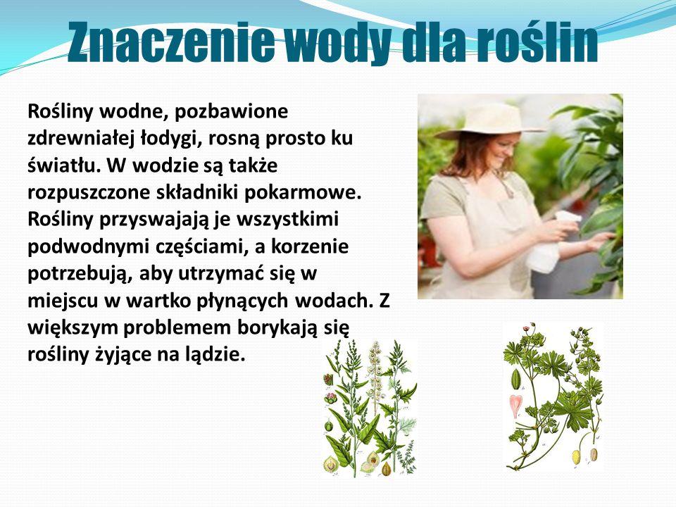 Znaczenie wody dla roślin Rośliny wodne, pozbawione zdrewniałej łodygi, rosną prosto ku światłu. W wodzie są także rozpuszczone składniki pokarmowe. R