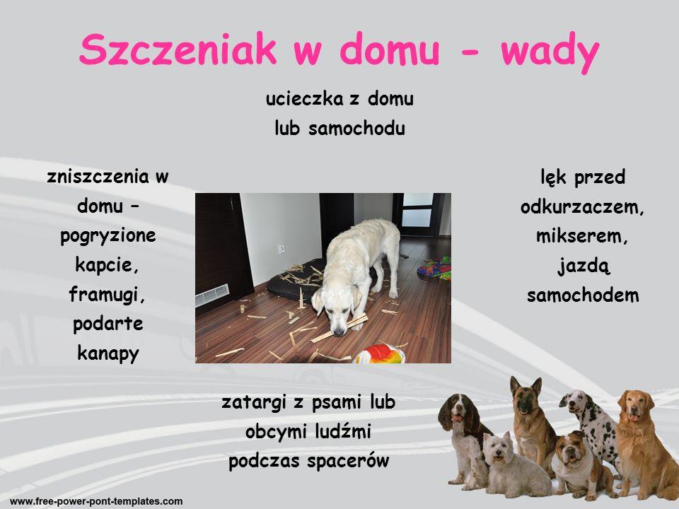 karmienie zabawa sprzątanie Pies w domu - obowiązki spacer kąpiel leczenie wychowanie