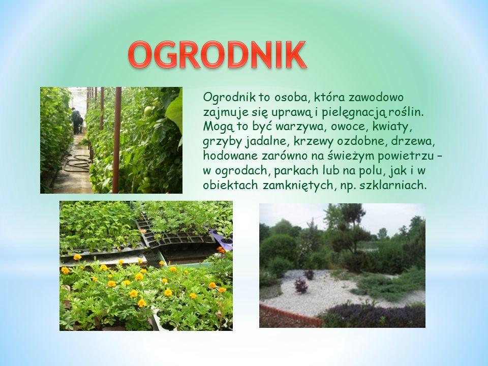 Ogrodnik to osoba, która zawodowo zajmuje się uprawą i pielęgnacją roślin.