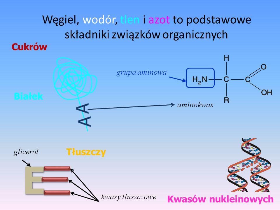 Węgiel, wodór, tlen i azot to podstawowe składniki związków organicznych Cukrów Kwasów nukleinowych Tłuszczy BiałekEE kwasy tłuszczowe glicerol aminok