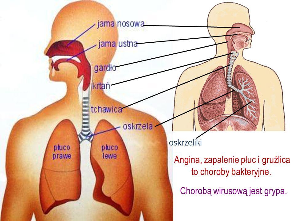 oskrzeliki Angina, zapalenie płuc i gruźlica to choroby bakteryjne. Chorobą wirusową jest grypa.