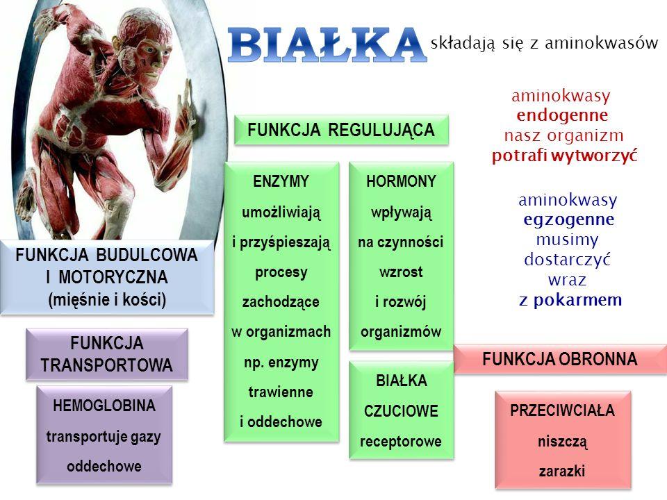 FUNKCJA BUDULCOWA I MOTORYCZNA (mięśnie i kości) FUNKCJA BUDULCOWA I MOTORYCZNA (mięśnie i kości) FUNKCJA REGULUJĄCA FUNKCJA REGULUJĄCA ENZYMY umożliw