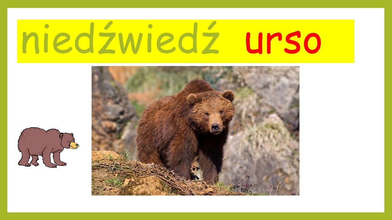 Do tworzenia prezentacji wykorzystano następujące linki: http://gify.joe.pl/animowane/zwierzeta/malpy/tanczaca-malpa/ http://www.tapeta-malpa-8.na-pulpit.com/ http://le-regne-animal.over-blog.com/top/22 http://ozwierzatkach.blox.pl/2015/10/Niedzwiedz-zabil-mezczyzne-Rodzina-walczy-o.html http://gify.joe.pl/animowane/zwierzeta/kurczaki-i-indyki/kolorowy-kogut-z-gitara/ http://www.hodowle.eu/547_Kaplonowanie_kogutow.html http://bajki-niezapominajki.blog.onet.pl/ https://eko-polska.pl/artykuly/niech-kura-dumnie-rozposciera-skrzydla/9698 http://www.e-gify.pl/myszy.php http://www.cda.pl/trol_internet/galeria/zdjecie/500151 http://marlena83.bloog.pl/id,331040808,title,Psy-i-koty,index.html?smoybbtticaid=615dae http://www.syberyjskiekoty.pl/galeria_zeus.html http://gify.joe.pl/animowane/zwierzeta/psy/szczekajacy-brazowy-pies/ http://blogiceo.nq.pl/pieskiswiat/wiersze/ http://www.wprost.pl/ar/245098/Niemiec-dzwoni-na-policje-swinia-za-mna-biega/ http://www.e-gify.pl/swinie.php