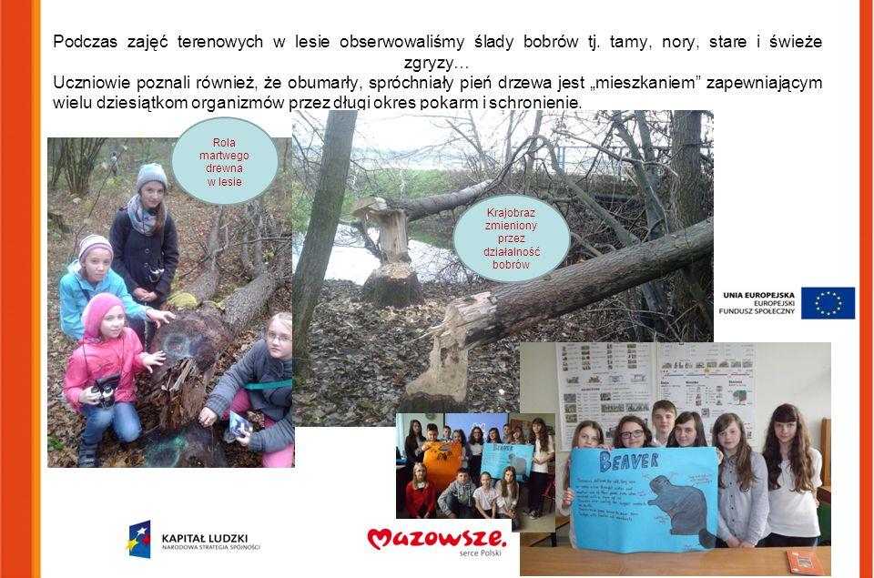 Podczas zajęć terenowych w lesie obserwowaliśmy ślady bobrów tj. tamy, nory, stare i świeże zgryzy… Uczniowie poznali również, że obumarły, spróchniał