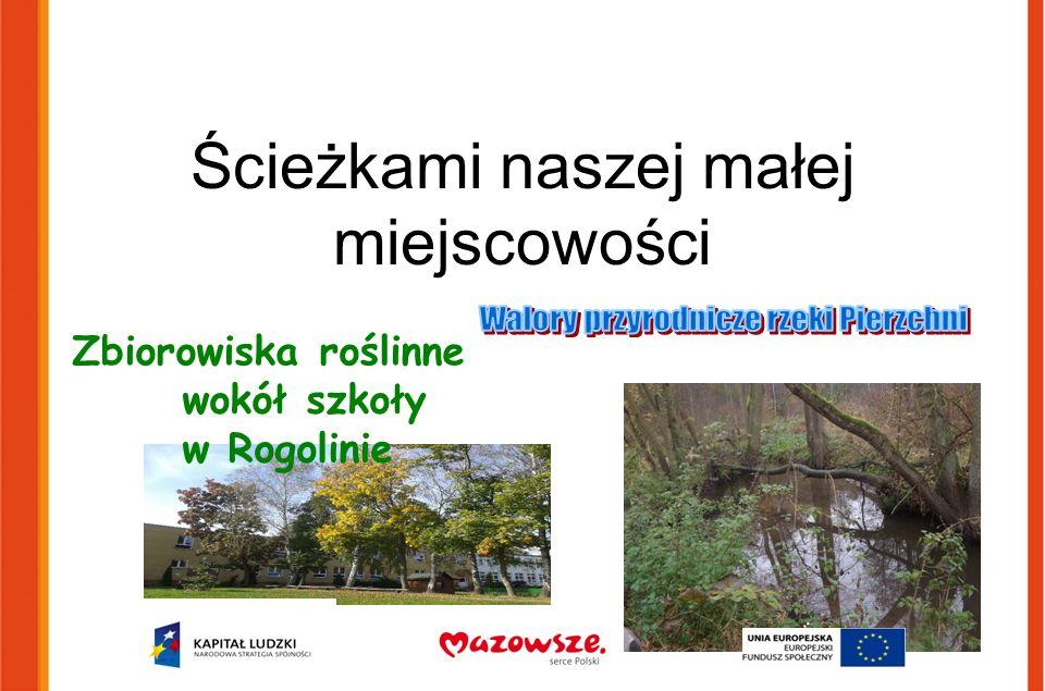 Ścieżkami naszej małej miejscowości Zbiorowiska roślinne wokół szkoły w Rogolinie