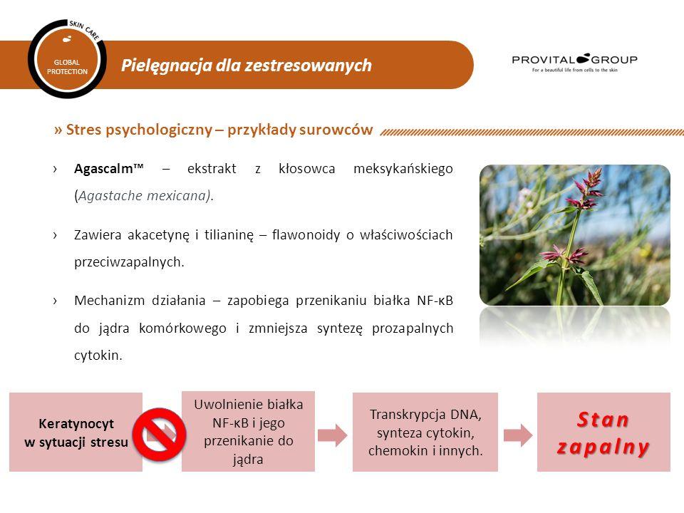 Pielęgnacja dla zestresowanych GLOBAL PROTECTION » Stres psychologiczny – przykłady surowców ›Agascalm™ – ekstrakt z kłosowca meksykańskiego (Agastach