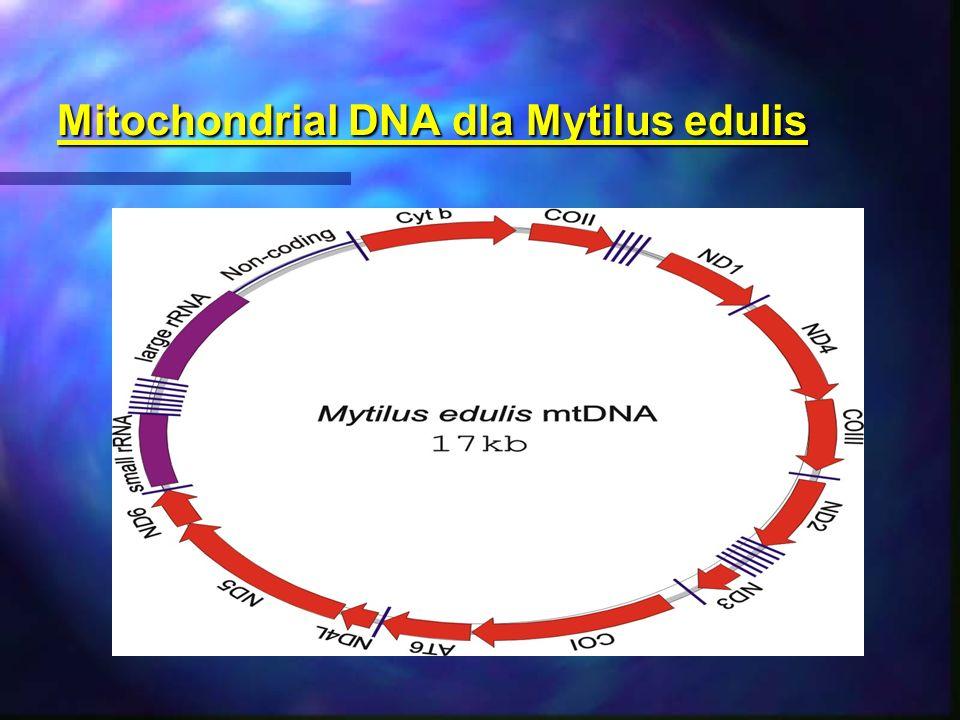 Mitochondrial DNA dla Mytilus edulis