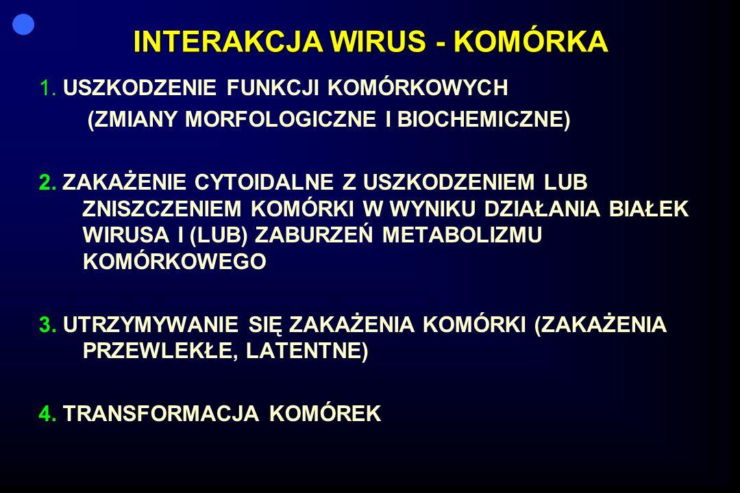 INTERAKCJA WIRUS - KOMÓRKA 1. USZKODZENIE FUNKCJI KOMÓRKOWYCH (ZMIANY MORFOLOGICZNE I BIOCHEMICZNE) 2. ZAKAŻENIE CYTOIDALNE Z USZKODZENIEM LUB ZNISZCZ