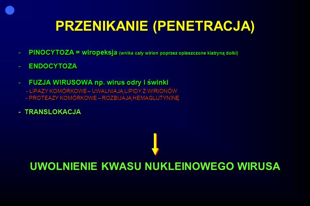 PRZENIKANIE (PENETRACJA) -PINOCYTOZA = wiropeksja (wnika cały wirion poprzez opłaszczone klatryną dołki) -ENDOCYTOZA -FUZJA WIRUSOWA np. wirus odry i