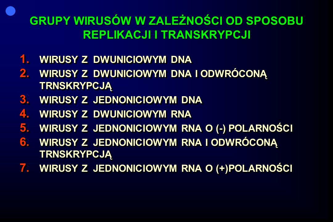 GRUPY WIRUSÓW W ZALEŻNOŚCI OD SPOSOBU REPLIKACJI I TRANSKRYPCJI 1. WIRUSY Z DWUNICIOWYM DNA 2. WIRUSY Z DWUNICIOWYM DNA I ODWRÓCONĄ TRNSKRYPCJĄ 3. WIR