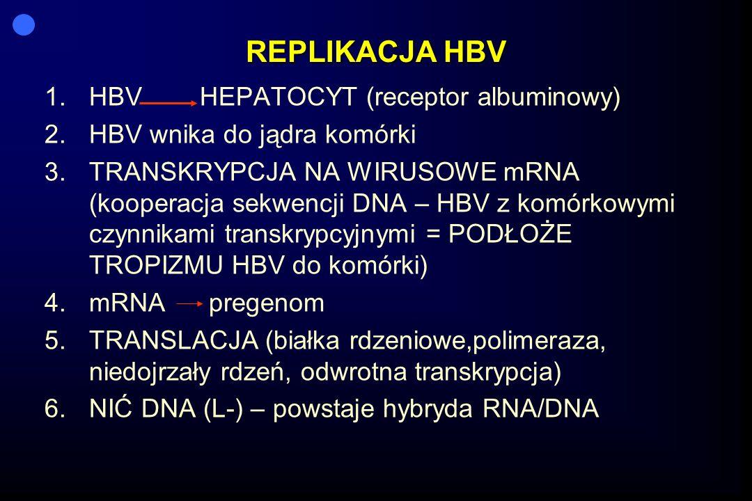 REPLIKACJA HBV 1.HBV HEPATOCYT (receptor albuminowy) 2.HBV wnika do jądra komórki 3.TRANSKRYPCJA NA WIRUSOWE mRNA (kooperacja sekwencji DNA – HBV z komórkowymi czynnikami transkrypcyjnymi = PODŁOŻE TROPIZMU HBV do komórki) 4.mRNA pregenom 5.TRANSLACJA (białka rdzeniowe,polimeraza, niedojrzały rdzeń, odwrotna transkrypcja) 6.NIĆ DNA (L-) – powstaje hybryda RNA/DNA