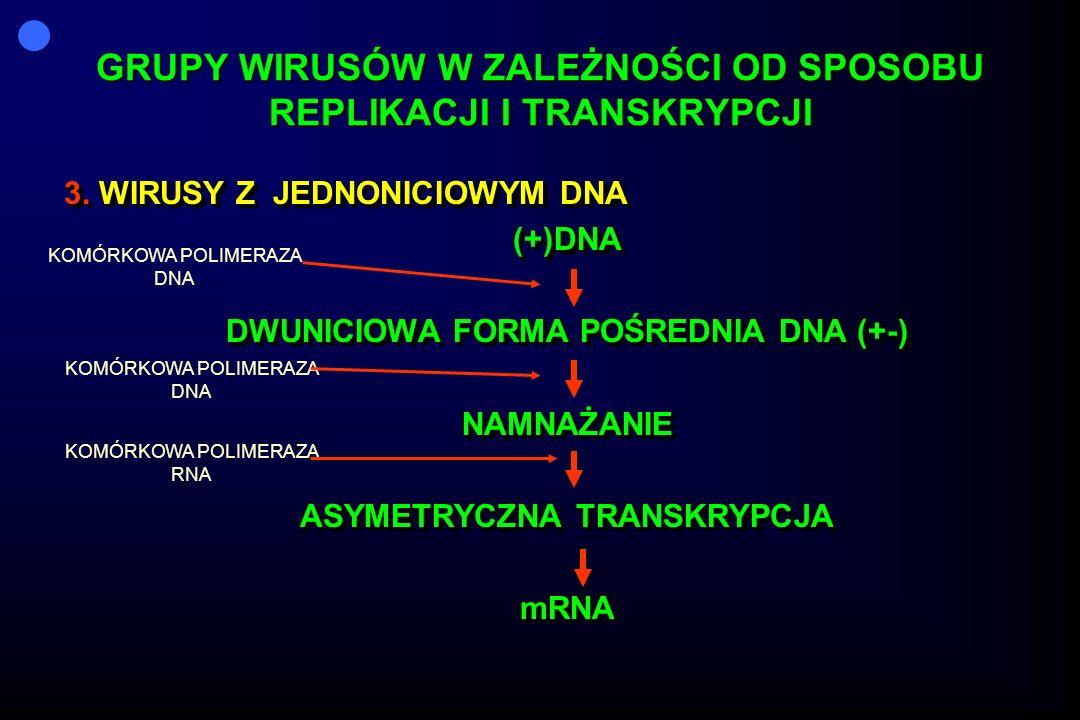 GRUPY WIRUSÓW W ZALEŻNOŚCI OD SPOSOBU REPLIKACJI I TRANSKRYPCJI 3. WIRUSY Z JEDNONICIOWYM DNA (+)DNA DWUNICIOWA FORMA POŚREDNIA DNA (+-) NAMNAŻANIE AS