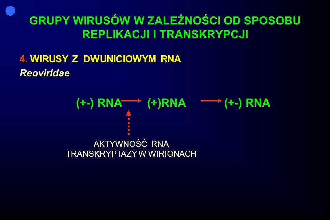 GRUPY WIRUSÓW W ZALEŻNOŚCI OD SPOSOBU REPLIKACJI I TRANSKRYPCJI 4. WIRUSY Z DWUNICIOWYM RNA Reoviridae (+-) RNA (+)RNA (+-) RNA 4. WIRUSY Z DWUNICIOWY