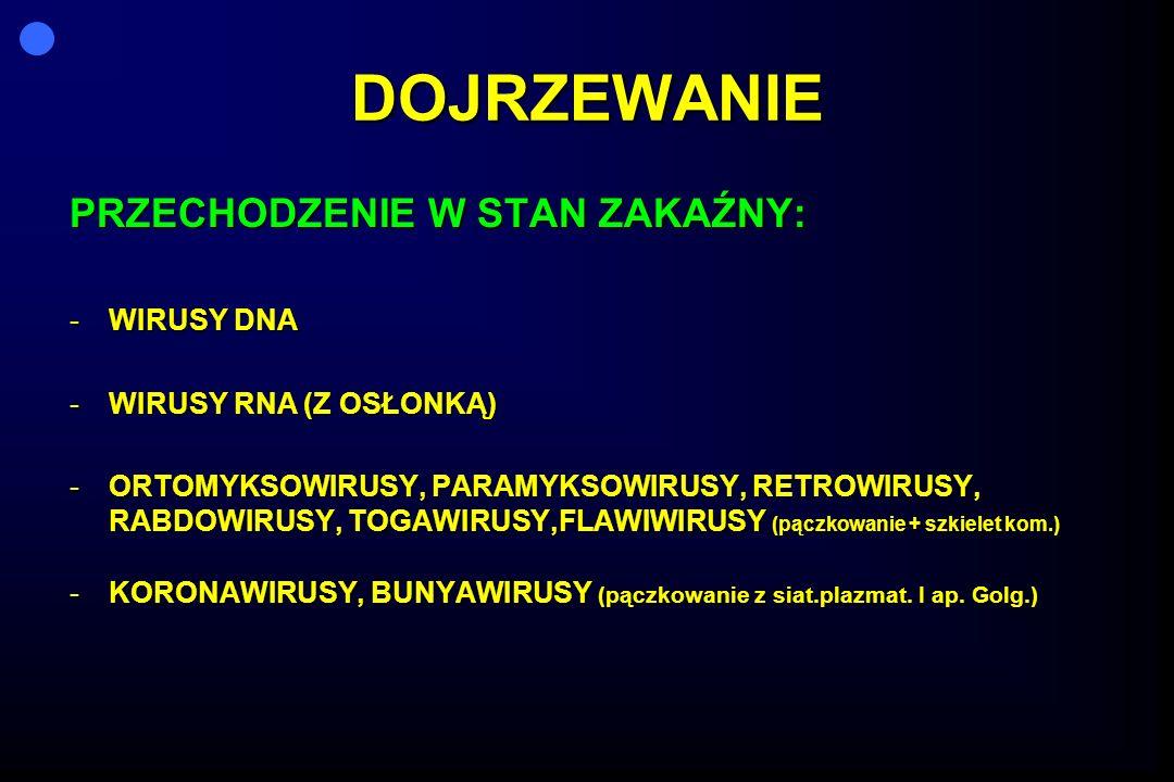 DOJRZEWANIE PRZECHODZENIE W STAN ZAKAŹNY: -WIRUSY DNA -WIRUSY RNA (Z OSŁONKĄ) -ORTOMYKSOWIRUSY, PARAMYKSOWIRUSY, RETROWIRUSY, RABDOWIRUSY, TOGAWIRUSY,FLAWIWIRUSY (pączkowanie + szkielet kom.) -KORONAWIRUSY, BUNYAWIRUSY (pączkowanie z siat.plazmat.