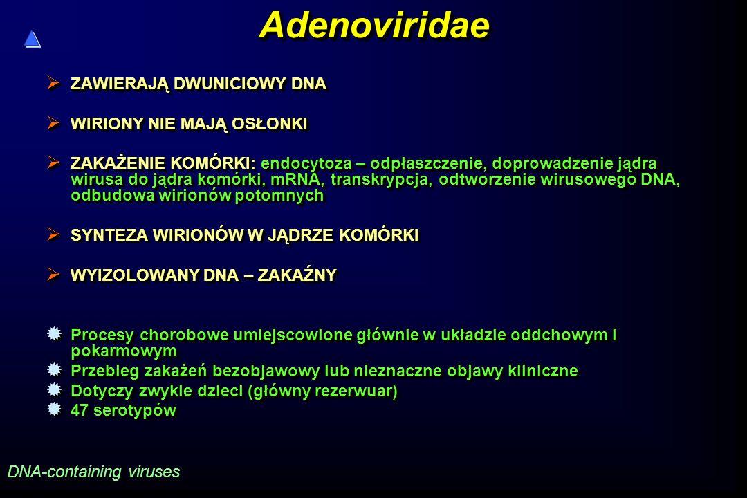 AdenoviridaeAdenoviridae  ZAWIERAJĄ DWUNICIOWY DNA  WIRIONY NIE MAJĄ OSŁONKI  ZAKAŻENIE KOMÓRKI: endocytoza – odpłaszczenie, doprowadzenie jądra wirusa do jądra komórki, mRNA, transkrypcja, odtworzenie wirusowego DNA, odbudowa wirionów potomnych  SYNTEZA WIRIONÓW W JĄDRZE KOMÓRKI  WYIZOLOWANY DNA – ZAKAŹNY  Procesy chorobowe umiejscowione głównie w układzie oddchowym i pokarmowym  Przebieg zakażeń bezobjawowy lub nieznaczne objawy kliniczne  Dotyczy zwykle dzieci (główny rezerwuar)  47 serotypów  ZAWIERAJĄ DWUNICIOWY DNA  WIRIONY NIE MAJĄ OSŁONKI  ZAKAŻENIE KOMÓRKI: endocytoza – odpłaszczenie, doprowadzenie jądra wirusa do jądra komórki, mRNA, transkrypcja, odtworzenie wirusowego DNA, odbudowa wirionów potomnych  SYNTEZA WIRIONÓW W JĄDRZE KOMÓRKI  WYIZOLOWANY DNA – ZAKAŹNY  Procesy chorobowe umiejscowione głównie w układzie oddchowym i pokarmowym  Przebieg zakażeń bezobjawowy lub nieznaczne objawy kliniczne  Dotyczy zwykle dzieci (główny rezerwuar)  47 serotypów DNA-containing viruses