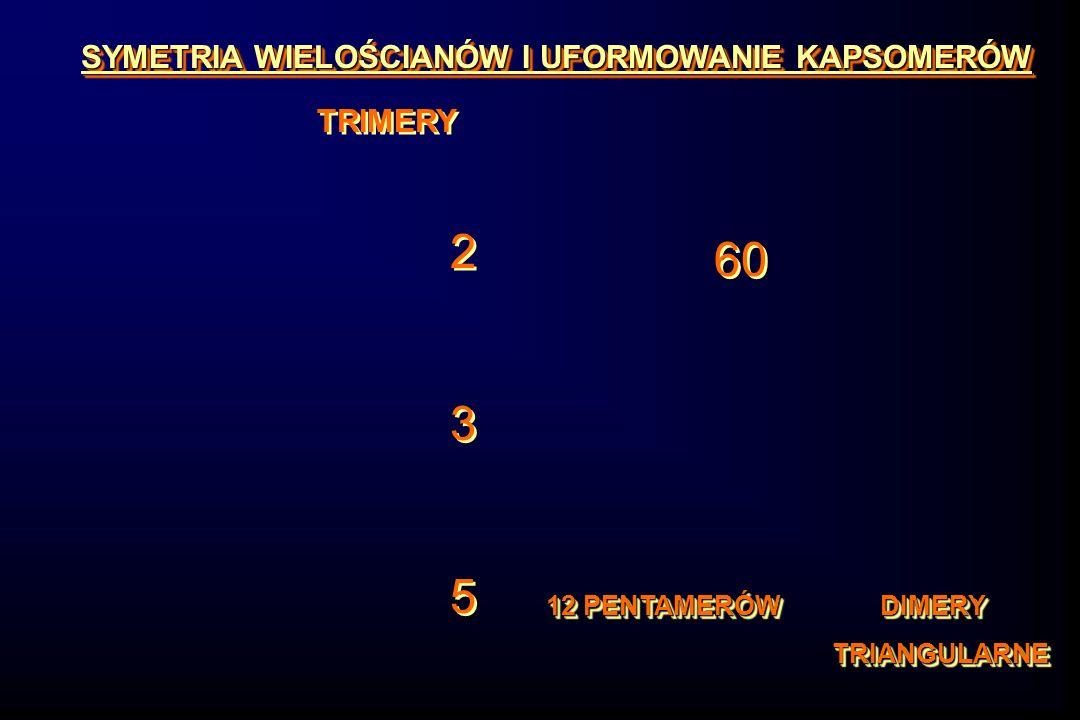 SYMETRIA WIELOŚCIANÓW I UFORMOWANIE KAPSOMERÓW TRIMERY 235235 235235 60 12 PENTAMERÓW DIMERY TRIANGULARNE TRIANGULARNE 12 PENTAMERÓW DIMERY TRIANGULARNE TRIANGULARNE