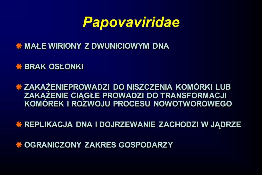 Papovaviridae  MAŁE WIRIONY Z DWUNICIOWYM DNA  BRAK OSŁONKI  ZAKAŻENIEPROWADZI DO NISZCZENIA KOMÓRKI LUB ZAKAŻENIE CIĄGŁE PROWADZI DO TRANSFORMACJI KOMÓREK I ROZWOJU PROCESU NOWOTWOROWEGO  REPLIKACJA DNA I DOJRZEWANIE ZACHODZI W JĄDRZE  OGRANICZONY ZAKRES GOSPODARZY  MAŁE WIRIONY Z DWUNICIOWYM DNA  BRAK OSŁONKI  ZAKAŻENIEPROWADZI DO NISZCZENIA KOMÓRKI LUB ZAKAŻENIE CIĄGŁE PROWADZI DO TRANSFORMACJI KOMÓREK I ROZWOJU PROCESU NOWOTWOROWEGO  REPLIKACJA DNA I DOJRZEWANIE ZACHODZI W JĄDRZE  OGRANICZONY ZAKRES GOSPODARZY
