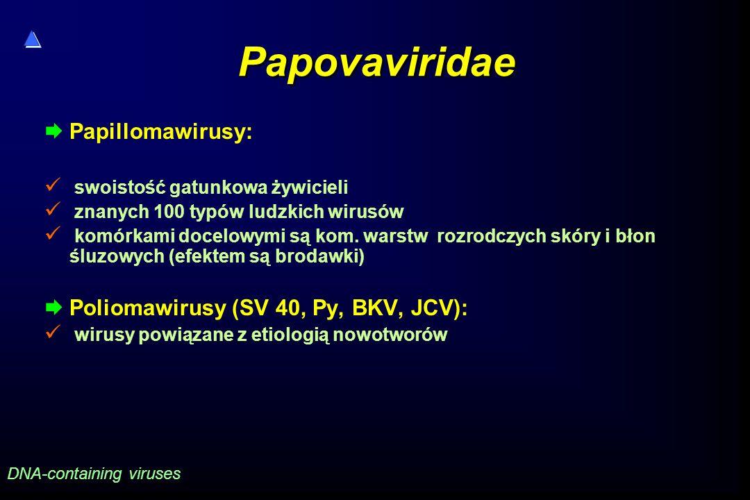 Papovaviridae  Papillomawirusy: swoistość gatunkowa żywicieli znanych 100 typów ludzkich wirusów komórkami docelowymi są kom. warstw rozrodczych skór
