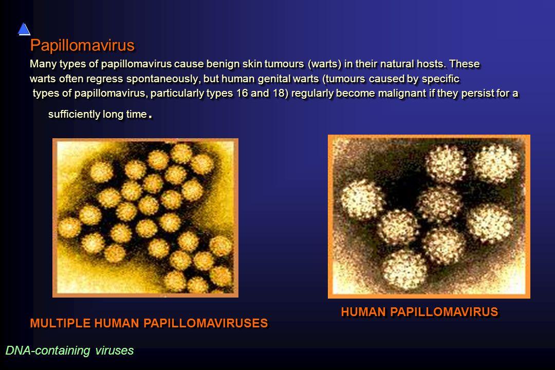 Papillomavirus Many types of papillomavirus cause benign skin tumours (warts) in their natural hosts. These warts often regress spontaneously, but hum