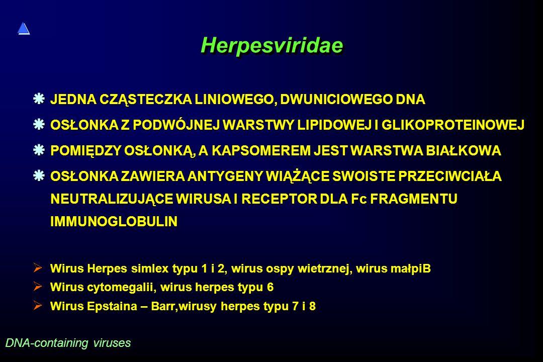 HerpesviridaeHerpesviridae  JEDNA CZĄSTECZKA LINIOWEGO, DWUNICIOWEGO DNA  OSŁONKA Z PODWÓJNEJ WARSTWY LIPIDOWEJ I GLIKOPROTEINOWEJ  POMIĘDZY OSŁONK