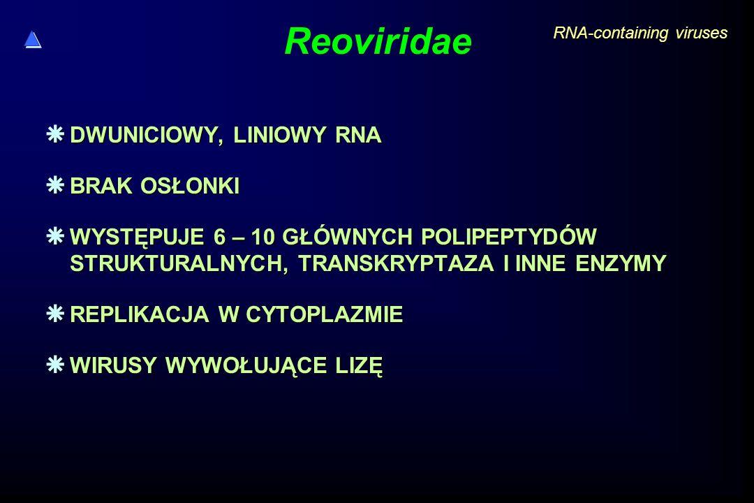 Reoviridae  DWUNICIOWY, LINIOWY RNA  BRAK OSŁONKI  WYSTĘPUJE 6 – 10 GŁÓWNYCH POLIPEPTYDÓW STRUKTURALNYCH, TRANSKRYPTAZA I INNE ENZYMY  REPLIKACJA W CYTOPLAZMIE  WIRUSY WYWOŁUJĄCE LIZĘ RNA-containing viruses