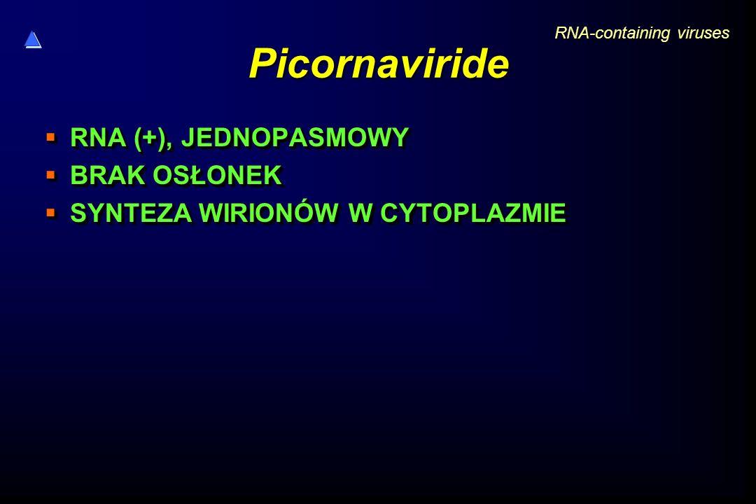 Picornaviride  RNA (+), JEDNOPASMOWY  BRAK OSŁONEK  SYNTEZA WIRIONÓW W CYTOPLAZMIE  RNA (+), JEDNOPASMOWY  BRAK OSŁONEK  SYNTEZA WIRIONÓW W CYTO