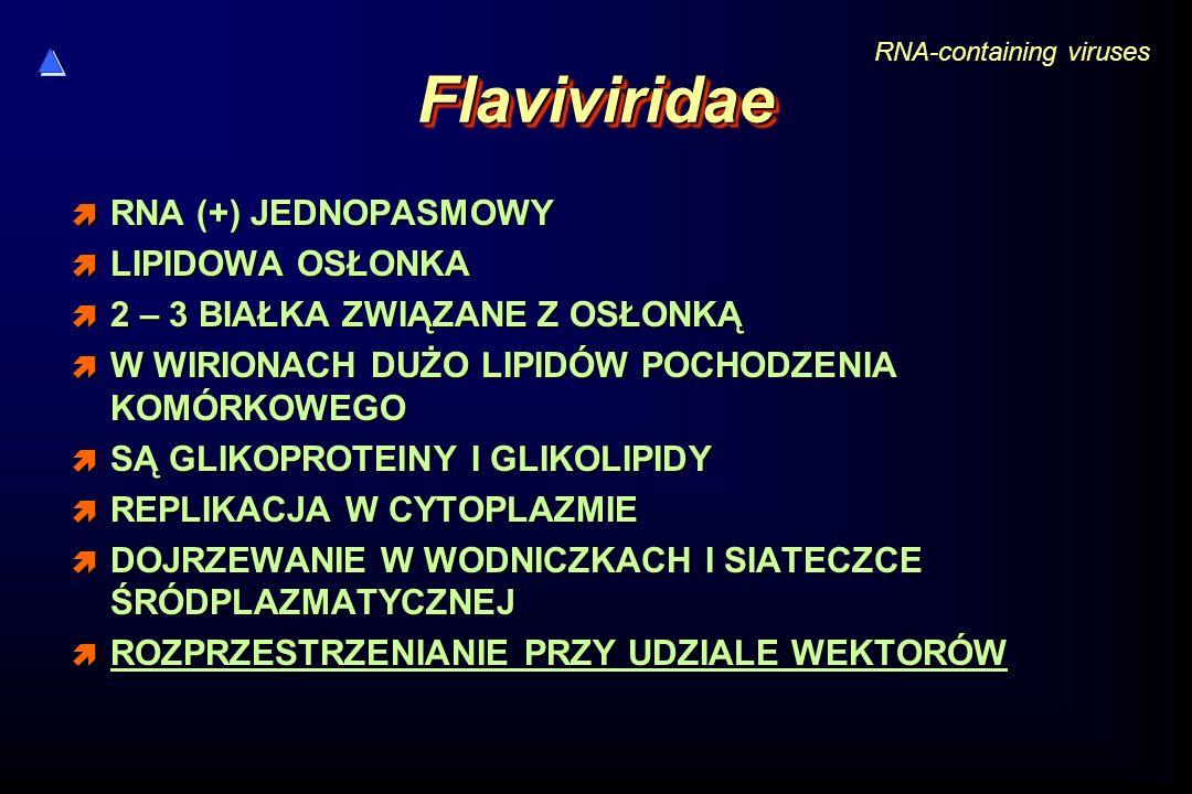 FlaviviridaeFlaviviridae  RNA (+) JEDNOPASMOWY  LIPIDOWA OSŁONKA  2 – 3 BIAŁKA ZWIĄZANE Z OSŁONKĄ  W WIRIONACH DUŻO LIPIDÓW POCHODZENIA KOMÓRKOWEG