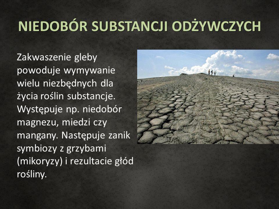 NIEDOBÓR SUBSTANCJI ODŻYWCZYCH Zakwaszenie gleby powoduje wymywanie wielu niezbędnych dla życia roślin substancje. Występuje np. niedobór magnezu, mie