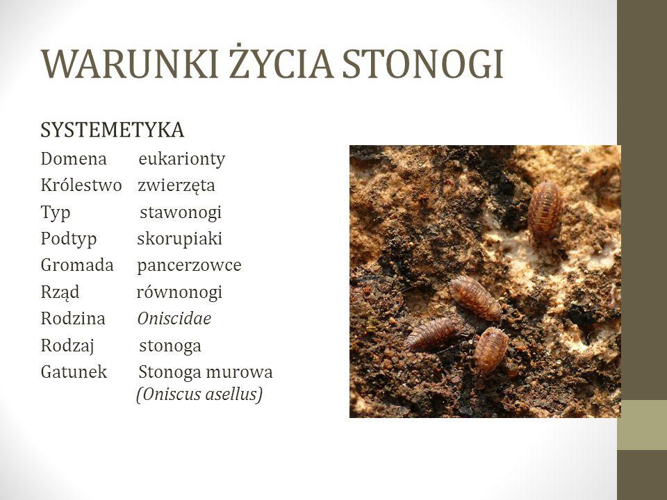 WARUNKI ŻYCIA STONOGI SYSTEMETYKA Domena eukarionty Królestwo zwierzęta Typ stawonogi Podtyp skorupiaki Gromada pancerzowce Rząd równonogi Rodzina Oni