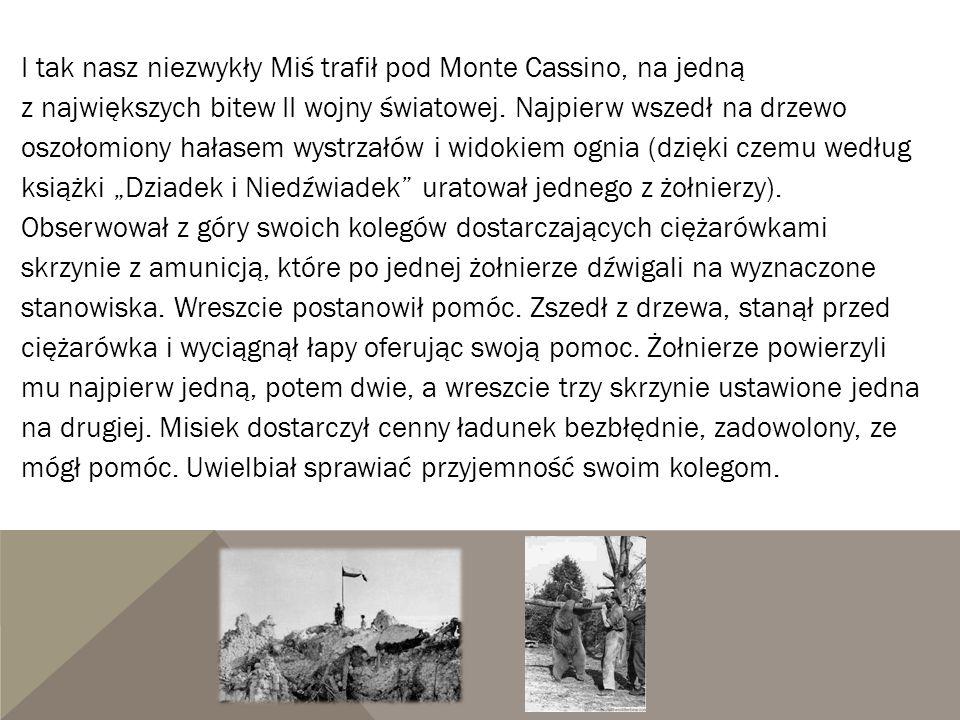 I tak nasz niezwykły Miś trafił pod Monte Cassino, na jedną z największych bitew II wojny światowej. Najpierw wszedł na drzewo oszołomiony hałasem wys