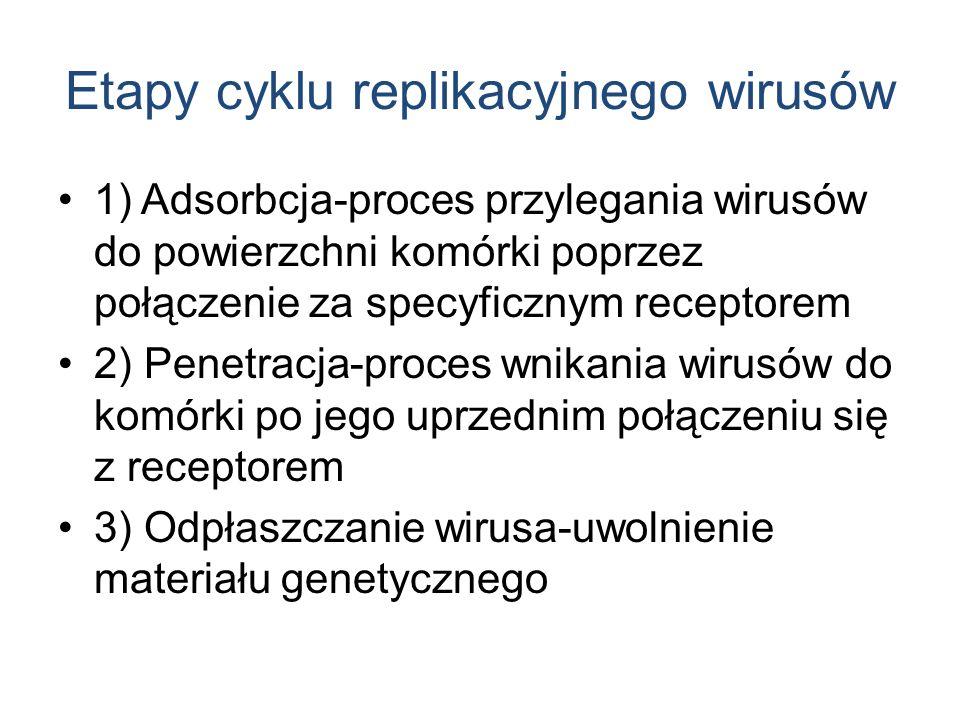 Etapy cyklu replikacyjnego wirusów 1) Adsorbcja-proces przylegania wirusów do powierzchni komórki poprzez połączenie za specyficznym receptorem 2) Penetracja-proces wnikania wirusów do komórki po jego uprzednim połączeniu się z receptorem 3) Odpłaszczanie wirusa-uwolnienie materiału genetycznego