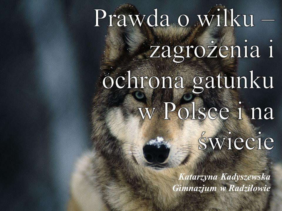 Katarzyna Kadyszewska Gimnazjum w Radziłowie