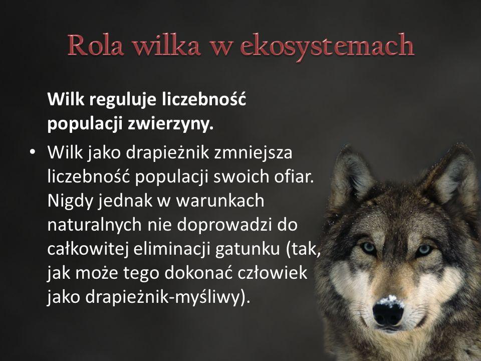 Wilk reguluje liczebność populacji zwierzyny.