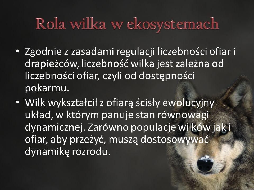 Zgodnie z zasadami regulacji liczebności ofiar i drapieżców, liczebność wilka jest zależna od liczebności ofiar, czyli od dostępności pokarmu.