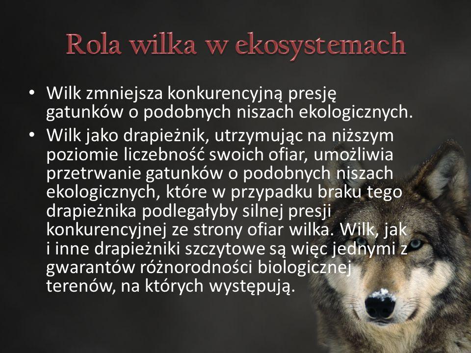 Wilk zmniejsza konkurencyjną presję gatunków o podobnych niszach ekologicznych.