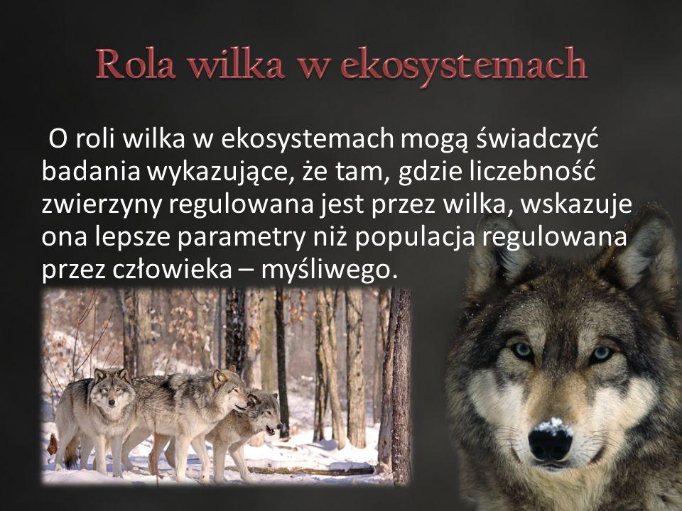 O roli wilka w ekosystemach mogą świadczyć badania wykazujące, że tam, gdzie liczebność zwierzyny regulowana jest przez wilka, wskazuje ona lepsze parametry niż populacja regulowana przez człowieka – myśliwego.